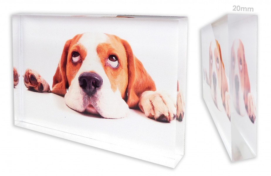 Perspex Panel with your Dog